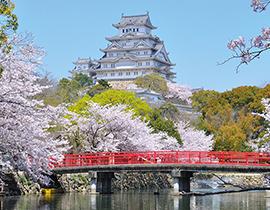 Япония: цветение сакуры